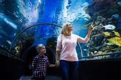 Poissons de watchig de famille à un aquarium images libres de droits