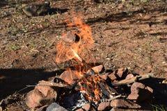 Poissons du feu photos stock