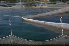 Poissons en mer Images stock