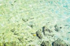 Poissons en mer avec le corail Photos libres de droits