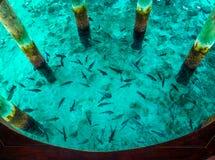 Poissons en mer, vue supérieure Image libre de droits