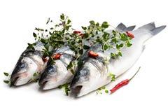 Poissons entiers frais de bar de mer avec des épices d'isolement sur un blanc images stock