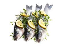 Poissons entiers frais de bar de mer avec le citron et les épices d'isolement sur un blanc image stock