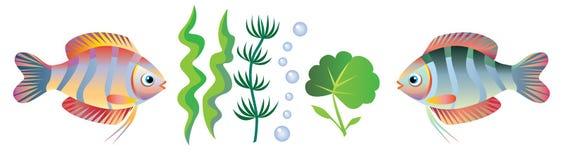 Poissons et algues Photos stock