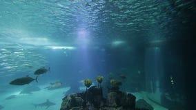 Poissons et amphibies divers dans un aquarium géant pour le divertissement aux touristes banque de vidéos
