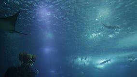 Poissons et amphibies divers dans un aquarium géant pour le divertissement aux touristes clips vidéos