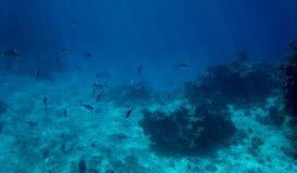 Poissons et corail tropicaux Image stock