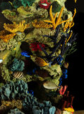 Poissons et corail tropicaux Photo stock