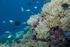 Poissons et Coral Seascape image stock