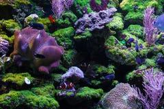 Poissons et coraux Image libre de droits