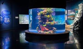 Poissons et coraux décoratifs colorés en plastique dans le nouvel aquarium photo stock