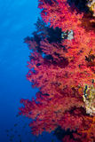 Poissons et coraux sur le récif Photos stock