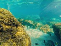 Poissons et coraux tropicaux en mer sous l'eau photos libres de droits