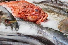 Poissons et fruits de mer sur l'affichage du marché Image libre de droits