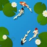 Poissons et lotus de Koi Photographie stock libre de droits