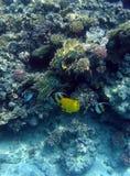 Poissons et récif coralien Photographie stock libre de droits