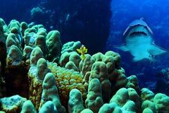 Poissons et requin de clown en récif coralien Photo stock