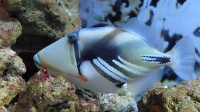 Poissons exotiques à St Petersburg Oceanarium Photos libres de droits