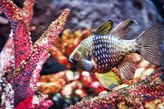 Poissons exotiques dans l'aquarium de vie marine à Bangkok photos stock