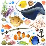 Poissons exotiques, récif coralien, algues, faune peu commune de mer, coquilles de mer, Photos libres de droits