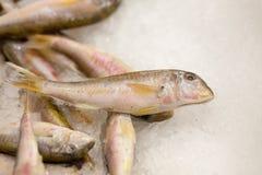 Poissons FIGÉS Marché de poissons frais brème de Valeur de premier ordre-tête Vente de poissons sur le marché Poissons de dorade  Photos libres de droits