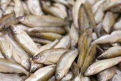 Poissons FIGÉS Marché de poissons frais brème de Valeur de premier ordre-tête Vente de poissons sur le marché Poissons de dorade  Photo stock