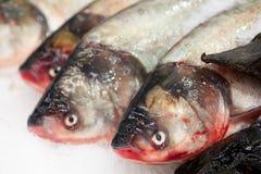 Poissons FIGÉS Marché de poissons frais brème de Valeur de premier ordre-tête Vente de poissons sur le marché Poissons de dorade  Images stock