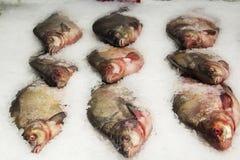 Poissons FIGÉS vente sur le marché Poissons d'eau de mer sur la glace Groupe de poissons congelés crus sur la glace Photo libre de droits