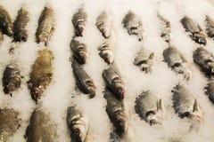 Poissons FIGÉS vente sur le marché Poissons d'eau de mer sur la glace Groupe de poissons congelés crus sur la glace Photographie stock libre de droits