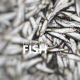 Poissons frais Abondance du poisson frais sur l'affichage du marché Photo libre de droits