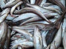 Poissons frais au marché de poissons Image libre de droits