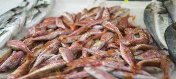 Poissons frais de mulet à la poissonnerie images stock