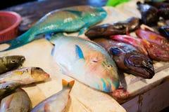 Poissons frais de perroquet sur le marché de fruits de mer Images libres de droits
