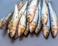 Poissons frais de sardine empilés dans Grey Background Images libres de droits