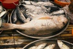 Poissons frais sur le marché de poissons Photo libre de droits