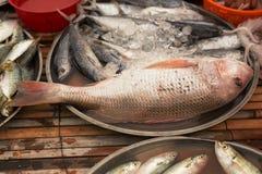 Poissons frais sur le marché de poissons Image libre de droits