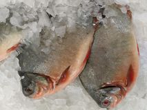 Poissons froids Images stock