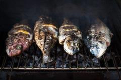 Poissons grillés avec des épices sur la fin du feu  Griller le dorado de poissons Image stock