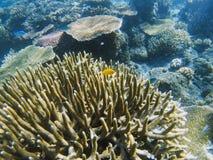 Poissons jaunes en récif coralien en épi Photo sous-marine d'habitants tropicaux de bord de la mer Photos stock