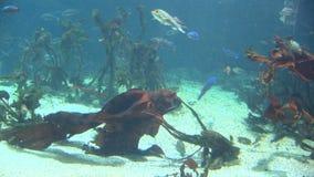 Poissons - la vie marine banque de vidéos