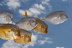 Poissons - lune Image stock