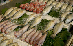Poissons morts Photos stock