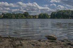 Poissons morts sur un rivage de lac Images stock