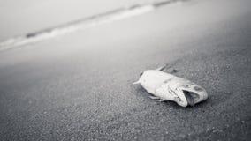 Poissons morts sur une plage Photos stock