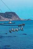 Poissons pêchés s'arrêtant au-dessus de la mer image libre de droits