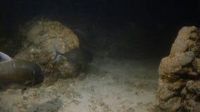 Poissons passant par des coraux banque de vidéos