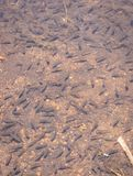 Poissons petits beaucoup dans le lac photos libres de droits