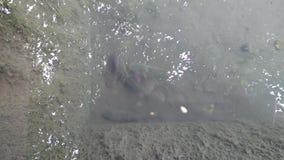 Poissons pour de petits étangs de jardin banque de vidéos