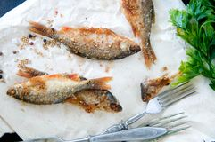 Poissons, puces servies Photographie stock libre de droits