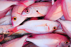 Poissons roses Image stock